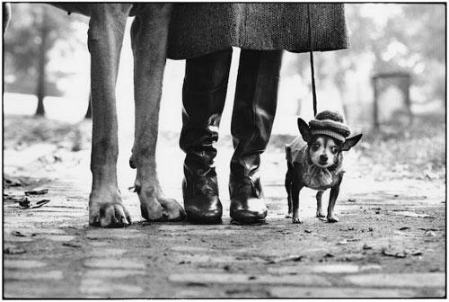 Dog legs, New York City, Elliott Erwitt, 1974